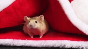 В якому утеплювачі не заводяться миші?